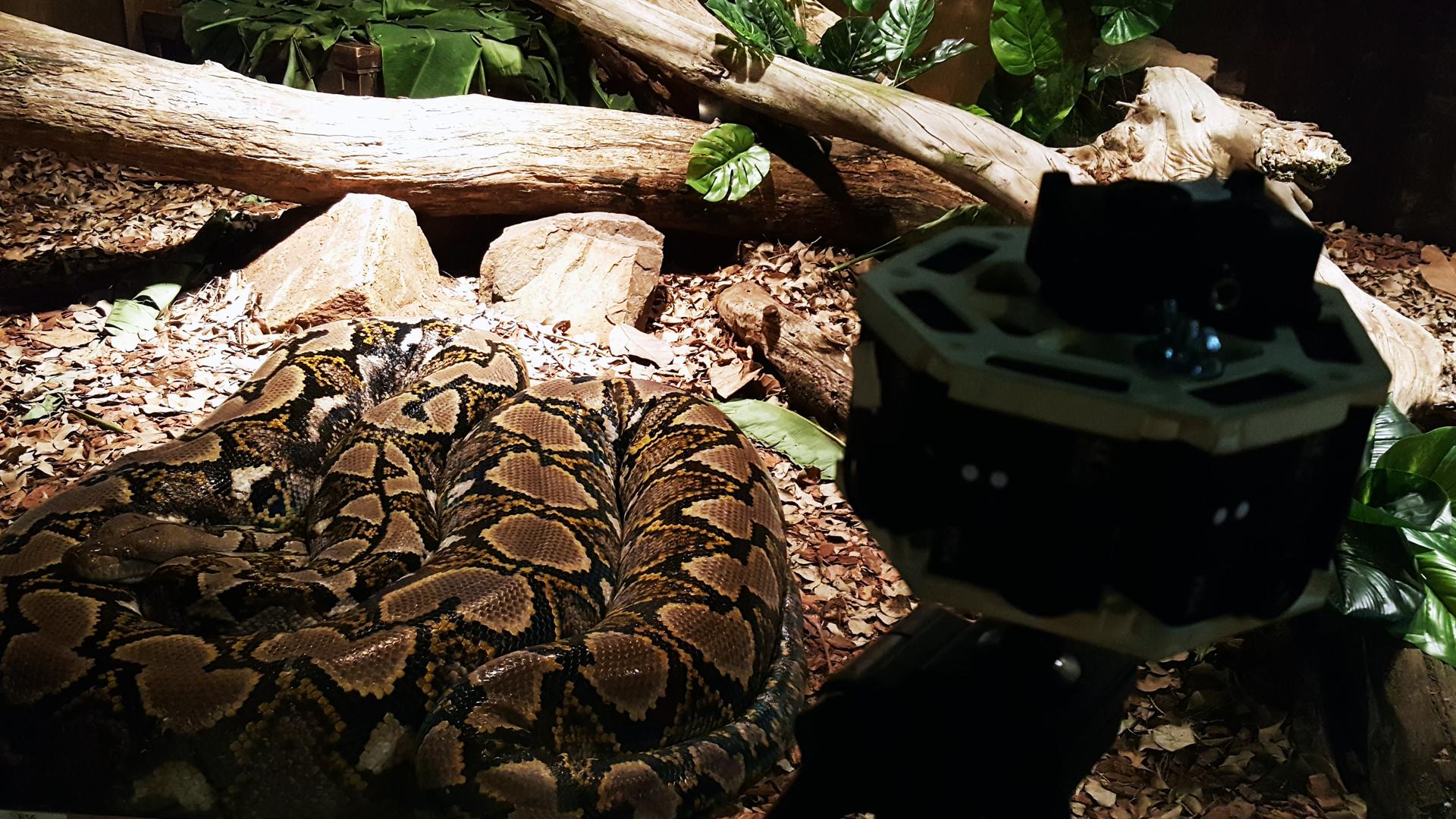 360-video-snake